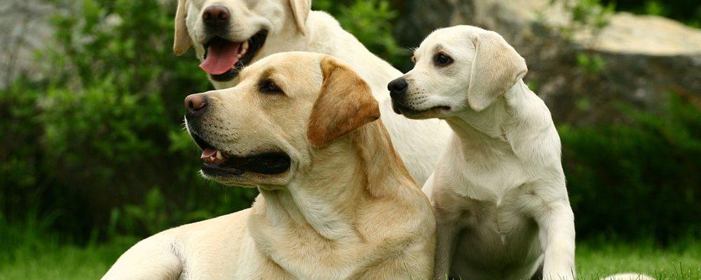 Bio Bachblüten Tropfen für Hunde