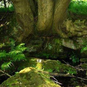 Bio Bachblüten Tropfen Rock Water